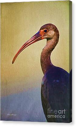 Ibis Nature Pose Canvas Print by Deborah Benoit