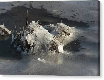 Ice And Salt Marsh Grasses Canvas Print by George Grall