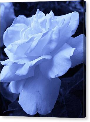 Ice Blue Rose Canvas Print by Bruce Bley