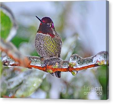 Canvas Print featuring the photograph Ice Cold Hummer by Jack Moskovita