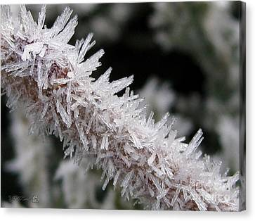 Ice Crystal Formation Along A Twig Canvas Print