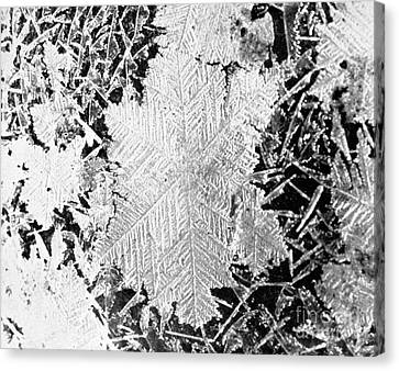Ice Crystals, 1926 Canvas Print by Science Source