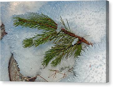 Canvas Print featuring the photograph Ice Crystals And Pine Needles by Tikvah's Hope
