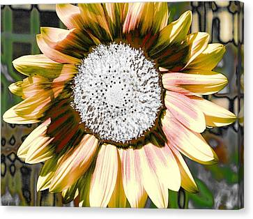 Iced Oatmeal Cookie Sunflower Canvas Print by Devalyn Marshall