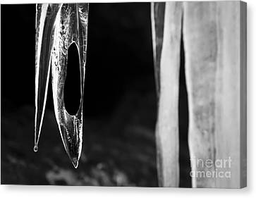 Icicle Canvas Print