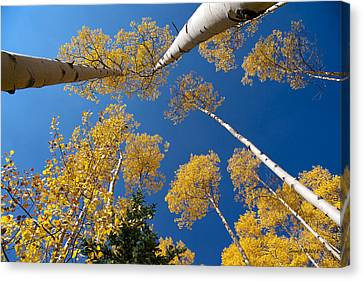 Iconic Aspen Photo Canvas Print by Stephen  Johnson