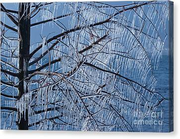 Canvas Print featuring the photograph Icy Tree by Charles Lupica