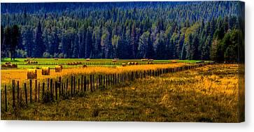 Idaho Hay Bales  Canvas Print by David Patterson