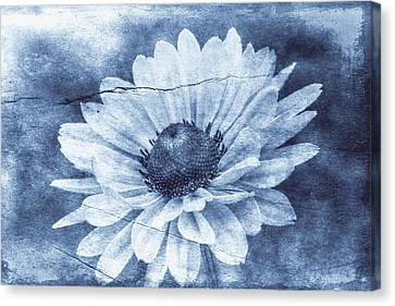 If Daisies Wore Blue Jeans Canvas Print by Christine Annas