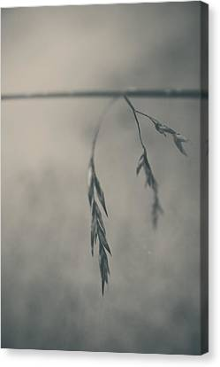 If You Lost Your Love For Me Canvas Print by Laurie Search