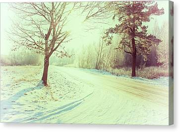 Illuminated By Sun On Snowy Forest Path Canvas Print by Rambynas