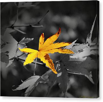 Illuminated Leaf Canvas Print by Mikki Cucuzzo