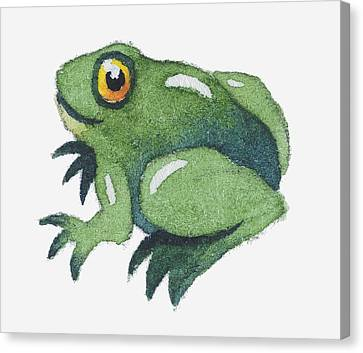 Frog Watercolor Canvas Print - Illustration Of A Frog by Dorling Kindersley