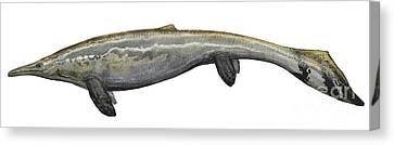 Illustration Of A Plotosaurus Canvas Print by Sergey Krasovskiy