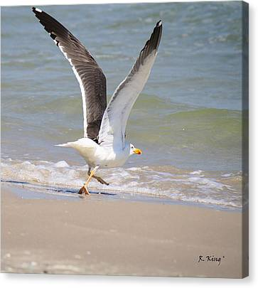 Im Out Of Here - Lesser Black-backed Gull Canvas Print by Roena King