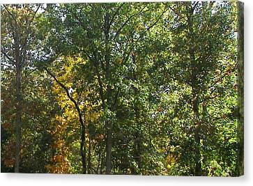 Canvas Print featuring the photograph Image Of Fall by Pamela Hyde Wilson