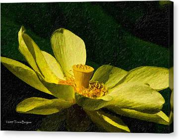 Impasto Lotus Canvas Print by Travis Burgess