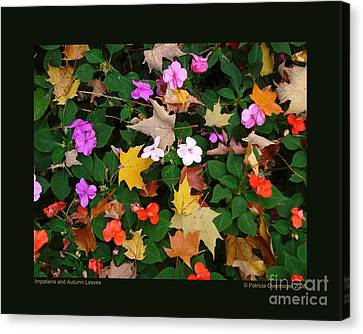 Impatiens And Autumn Leaves Canvas Print by Patricia Overmoyer