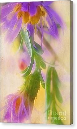 Impression Of Asters Canvas Print by Judi Bagwell