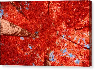 Impression Of Red Maple Canvas Print by Charline Xia
