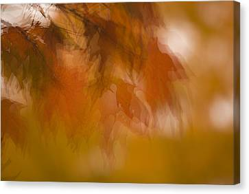Canvas Print featuring the photograph Impressionistic Maple by Lisa Missenda