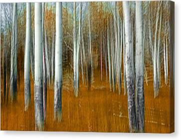 Impressionistic Orange Forest Canvas Print by Randall Nyhof