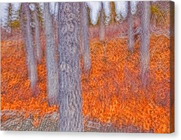 Impressionistic View Of Trees Canvas Print by Robert Postma