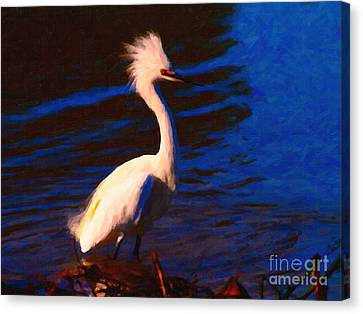Impressions Of A Snowy Egret . Painterly Canvas Print by Wingsdomain Art and Photography