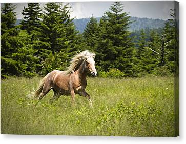 Canvas Print featuring the photograph In A Hurry by Carrie Cranwill