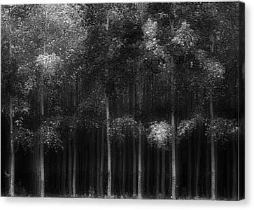 In A Row Canvas Print