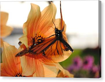 Canvas Print featuring the photograph In Flight... by Michael Frank Jr