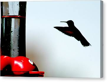 Canvas Print featuring the photograph In Flight by Wanda Brandon