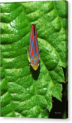 Canvas Print featuring the photograph In My Yard 001 by George Bostian