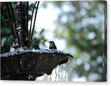 Canvas Print featuring the photograph In The Cool Of The Morning #1 by Linda Cox