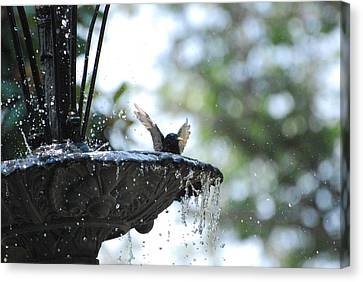 Canvas Print featuring the photograph In The Cool Of The Morning #3 by Linda Cox