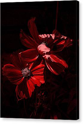 In The Cosmos Canvas Print by Yvonne Scott