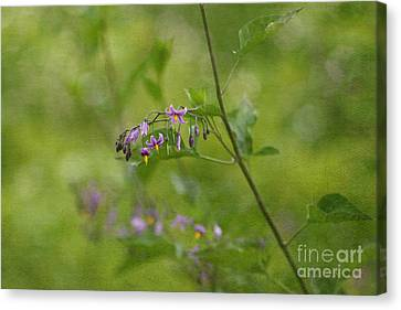 In The Garden Canvas Print by Beve Brown-Clark Photography