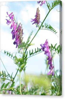 In The Grass Canvas Print by Ioana Geacar