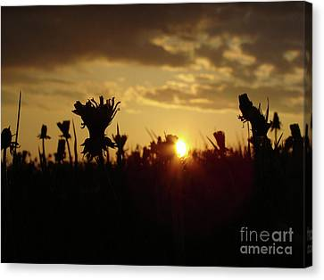 Canvas Print featuring the photograph In The Middle Of Grass by Bruno Santoro