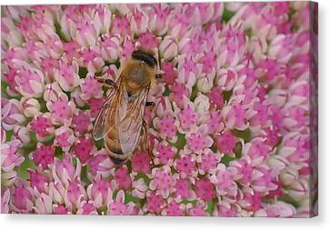 In The Pink Canvas Print by Ronda Broatch