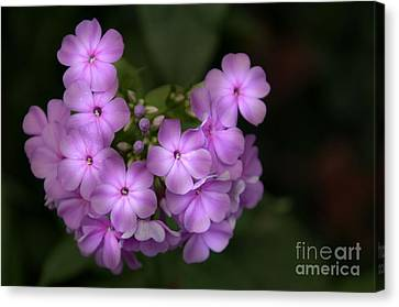 Canvas Print featuring the photograph In The Spotlight by Tamera James