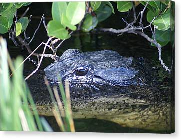 Canvas Print featuring the photograph In The Swamp by Jerry Cahill