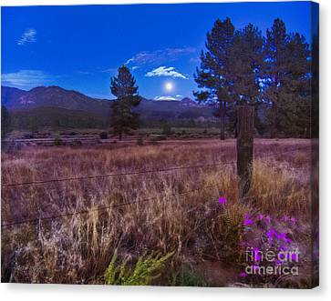In The Twilight Canvas Print
