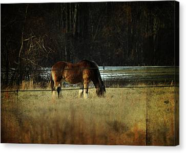 In The Winter Pasture Canvas Print by Rebecca Sherman