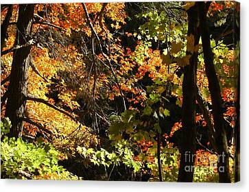 In The Woods Canvas Print by Kathleen Struckle