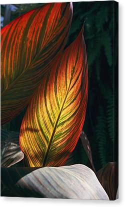 In This Vertical View, Sunlight Canvas Print by Stephen St. John