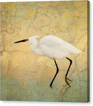 Incidental Dance Canvas Print by Karen Lynch