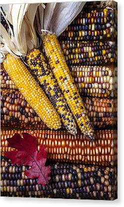 Red Leaf Canvas Print - Indian Corn by Garry Gay