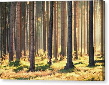 Autumn Landscape Canvas Print - Indian Summer In Woods by Matthias Haker Photography