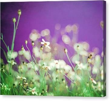 Large White Flower Canvas Print - Infatuation In Purple by Amy Tyler